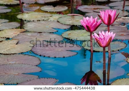 Altin Osmanaj S Portfolio On Shutterstock