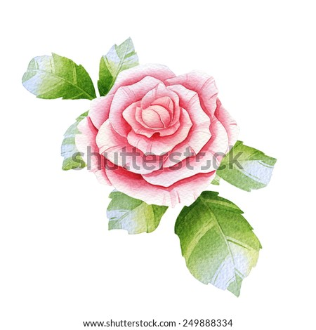 Pink watercolor rose on the white - stock photo