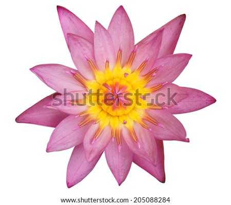 Pink Waterlily on white background with clipping path - stock photo