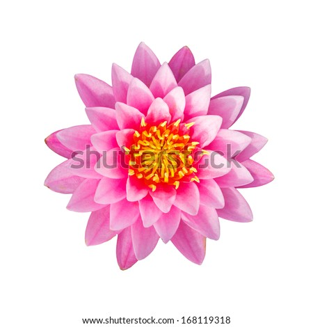 Pink waterlily or lotus flower isolated on white background, with clipping path. - stock photo