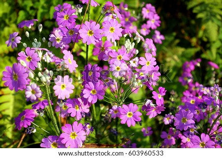 purple flower with yellow center stock images, royaltyfree images, Beautiful flower