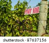 Pinot Noir sign on grape vine in Niagara on the Lake wine country in Ontario, Canada - stock photo
