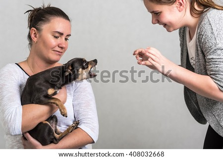 Pinscher dog defend the owner - stock photo