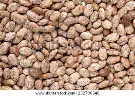 Pinto bean background - stock photo