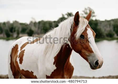 Appaloosa Stock Images Royalty Free Images Amp Vectors
