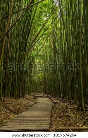 Pipiway trail in bamboo forest - Hawaii