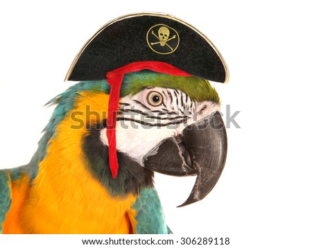 pirate macaw parrot studio cutout - stock photo
