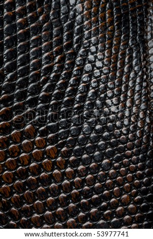 Piton leather - stock photo
