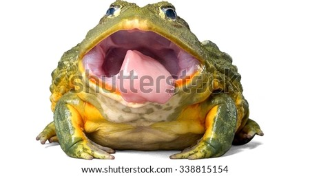 Pixie Frog Sticking Out Tongue - stock photo