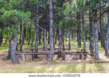 place for camping and relaxation in a pine forest