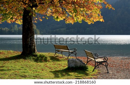place to relax - two benches at schliersee lake shore, autumnal chestnut tree - stock photo