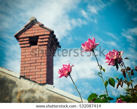 Place where wild roses grow and brick chimney in the background.