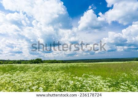 Plain Nature Growth Season  - stock photo