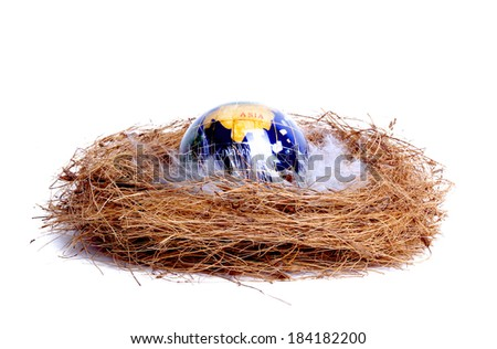 planet with white feathers in the nest, isolated on white - stock photo