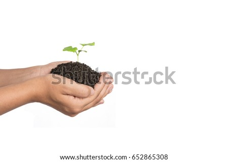 Plant a tree.Symbol of spring and ecology concept , World Environment Day Concept,isolated on white background.
