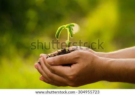 Plant,Agriculture,Seed,Seeding,Tree,Forest, Male hand holding sprout for planting with sunlight over natural forest green background
