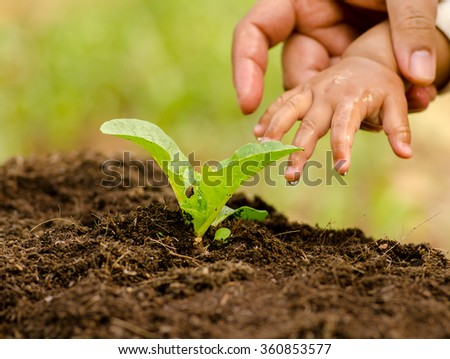 plant,Agriculture, Seeding,Seedling,Baby and Farther hand watering to young plant over sunlight in morning time