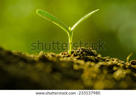 Plant,Agriculture,Seeding,Seedling,Close up Young plant growing over green background - stock photo
