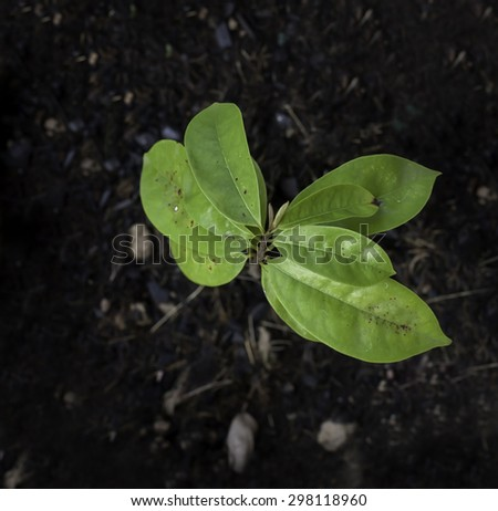 Plant, Agriculture, Seeding,Seedling, Close up Young plant growing over soil background - stock photo