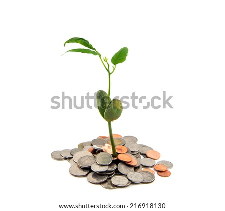 plant and coins , currency, investment and business concepts