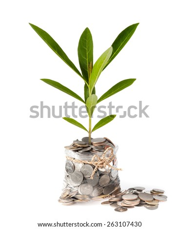plant and coins in plastic bags on white background, investment and business concepts