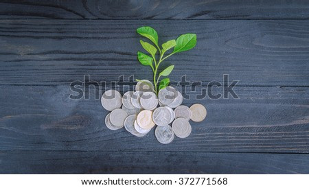 plant and coins top view, investment and business concepts - stock photo