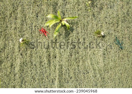 Plant and flower as backdrop in the park - stock photo