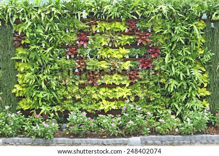 Plant and Flower as backdrop in the public park - stock photo