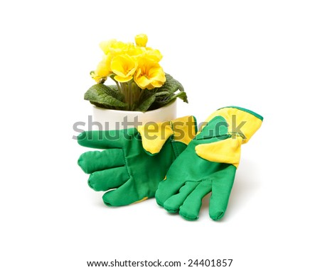 Plant and Gloves