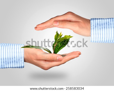 Plant and hands collage over gray background. - stock photo