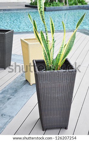 Plant and rattan flower pots by the pool - stock photo