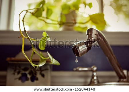 Plant asking for water - stock photo