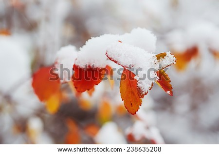 Plant branch under the snow, natural vintage winter  background, macro image - stock photo