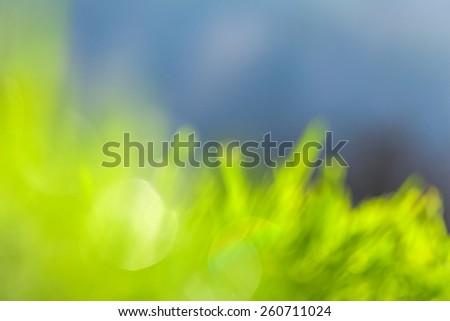 plant breeding - stock photo