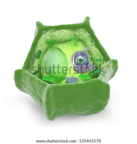 Plant cell cutaway science illustration - stock photo