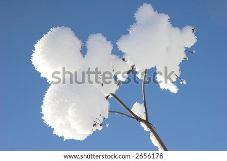 Plant covered in fresh puffy snow. - stock photo