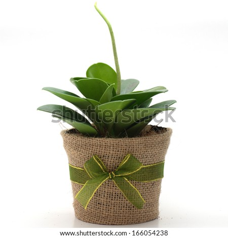 plant decoration  in a pot