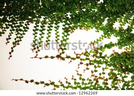 plant decorative - stock photo