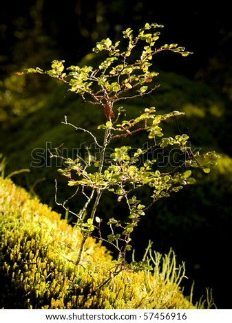 Plant detail in a dense and ancient forest - stock photo