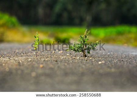 Plant emerging through asphalt against all odds. Symbol for natural forces. Background and foreground are out of focus. - stock photo