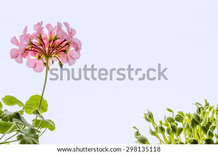 plant: flower and soy sprouts
