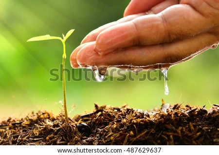 Plant for life concept with Male hand watering young tree and sunlight