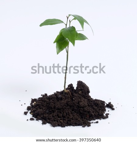 Plant from clod of earth