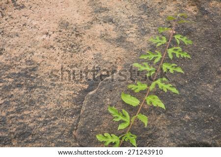 plant green leaf on sand stone   - stock photo