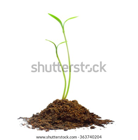 plant Green sprout a growing - stock photo