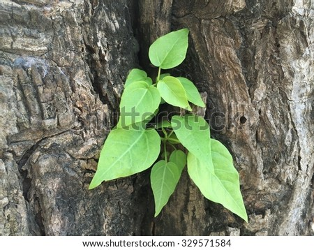 Plant grow between two tree same as baby born from father and mother - stock photo