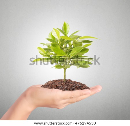 plant growing from in hand