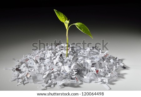 Plant growing from recycled shredded paper - stock photo