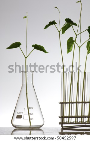 plant growing in a laboratory flasks with a white background - stock photo
