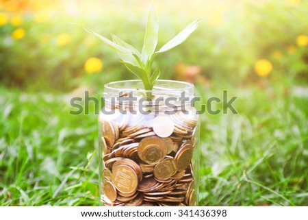 Plant growing in coins outside - stock photo